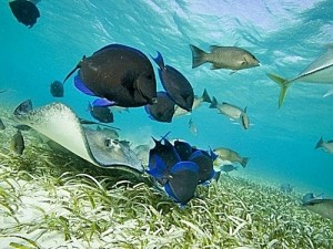 belize_shark_ray_alley_and_hol_chan_snorkeling_excursion_by_boat_with_caye_caulker_512-302